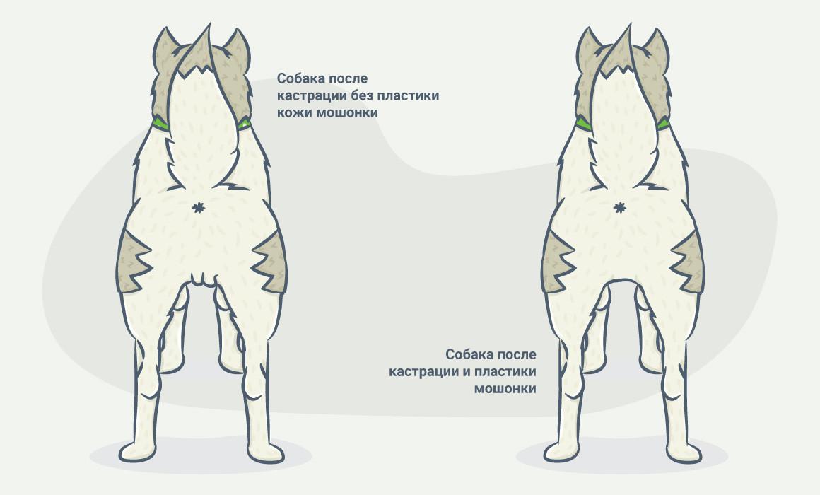 Плюсы и минусы стерилизации собаки