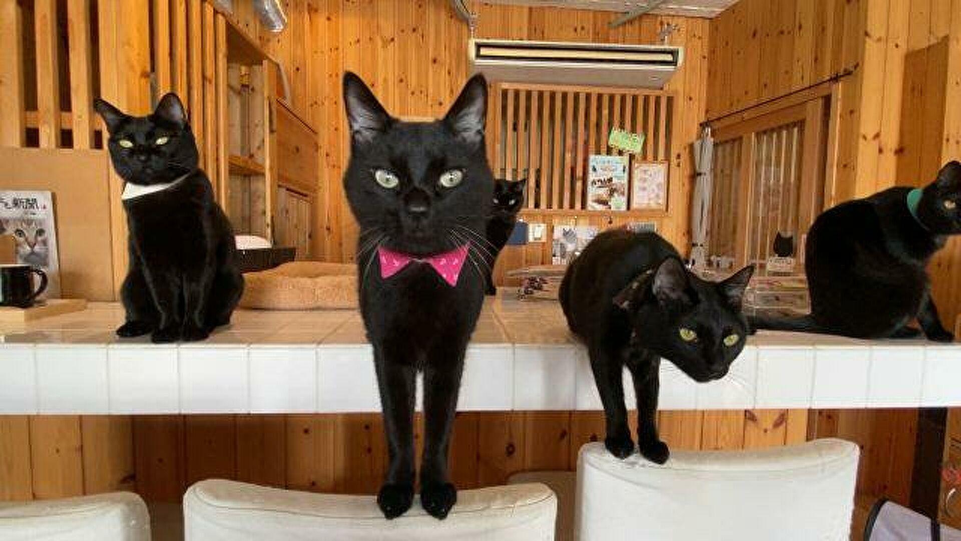 Почему считают что черные кошки приносят несчастье