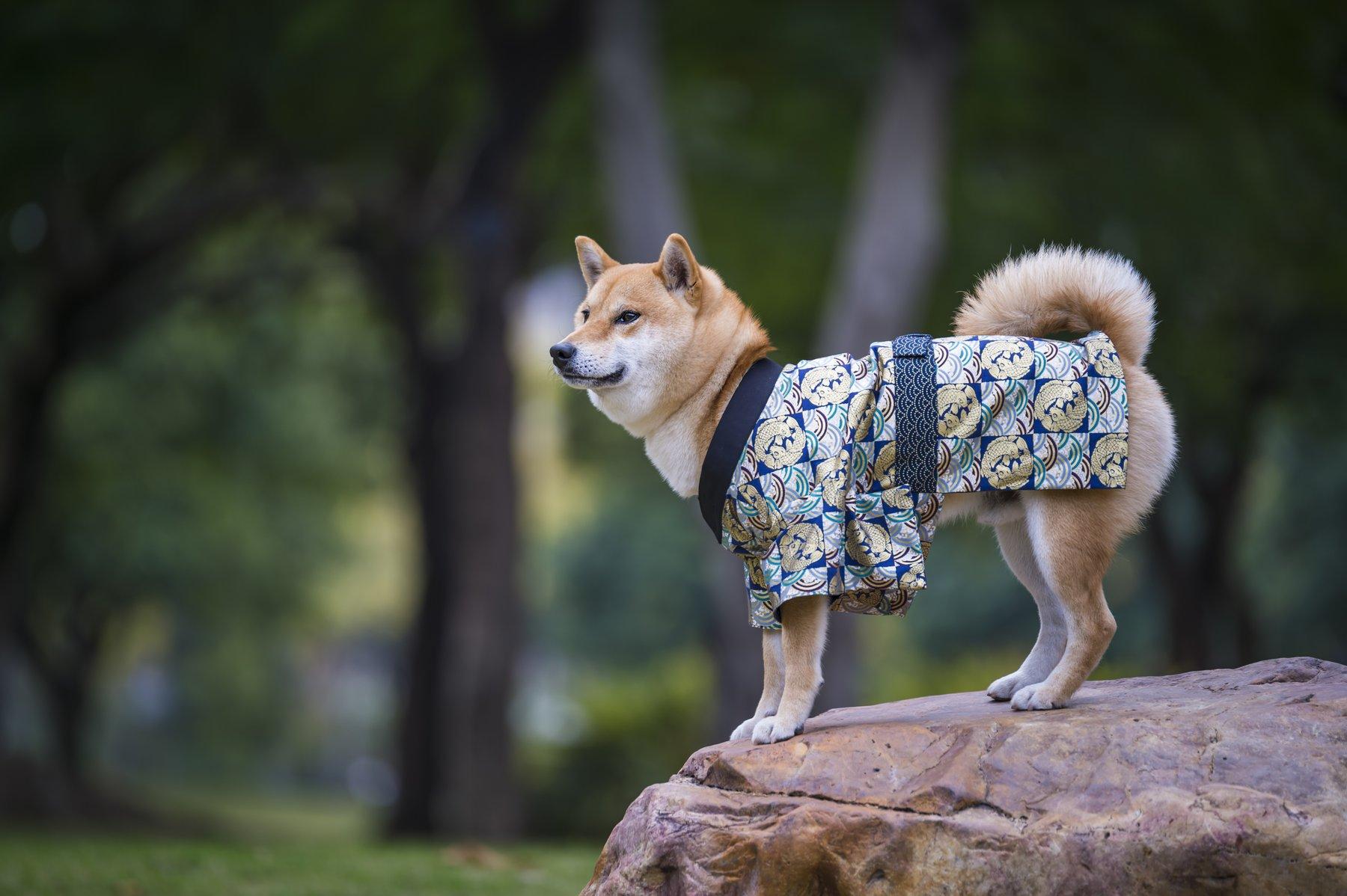 Японские клички для собак мальчиков и девочек