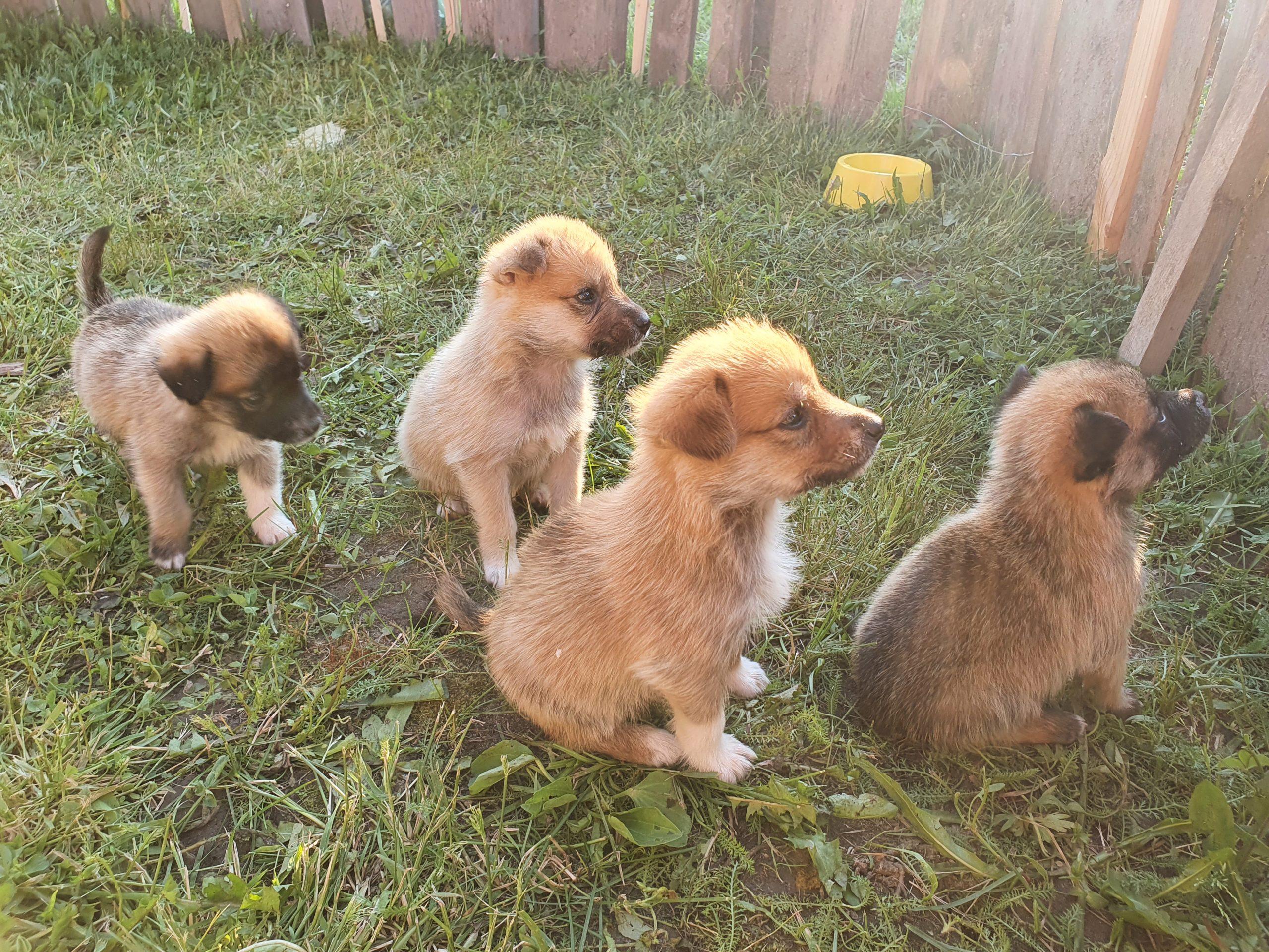 Беспородные щенки и собаки