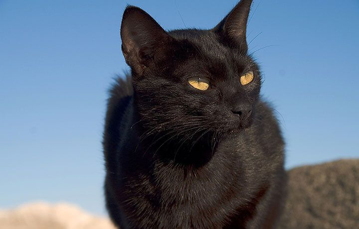 Как назвать чёрного кота или кошку