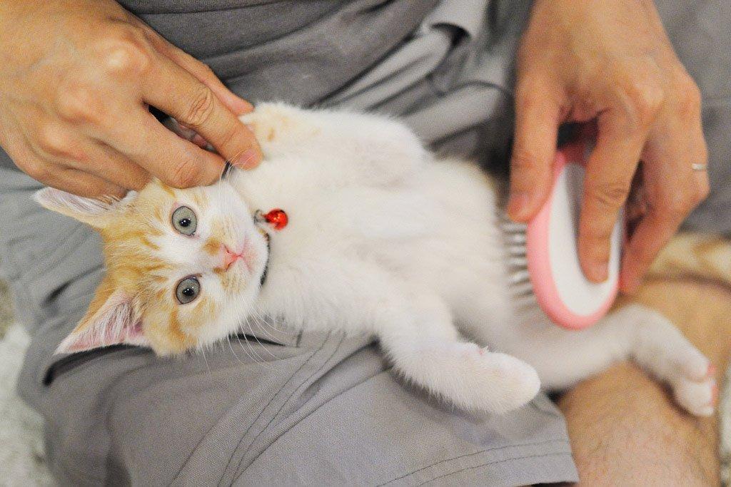 Как ухаживать за котенком в домашних условиях