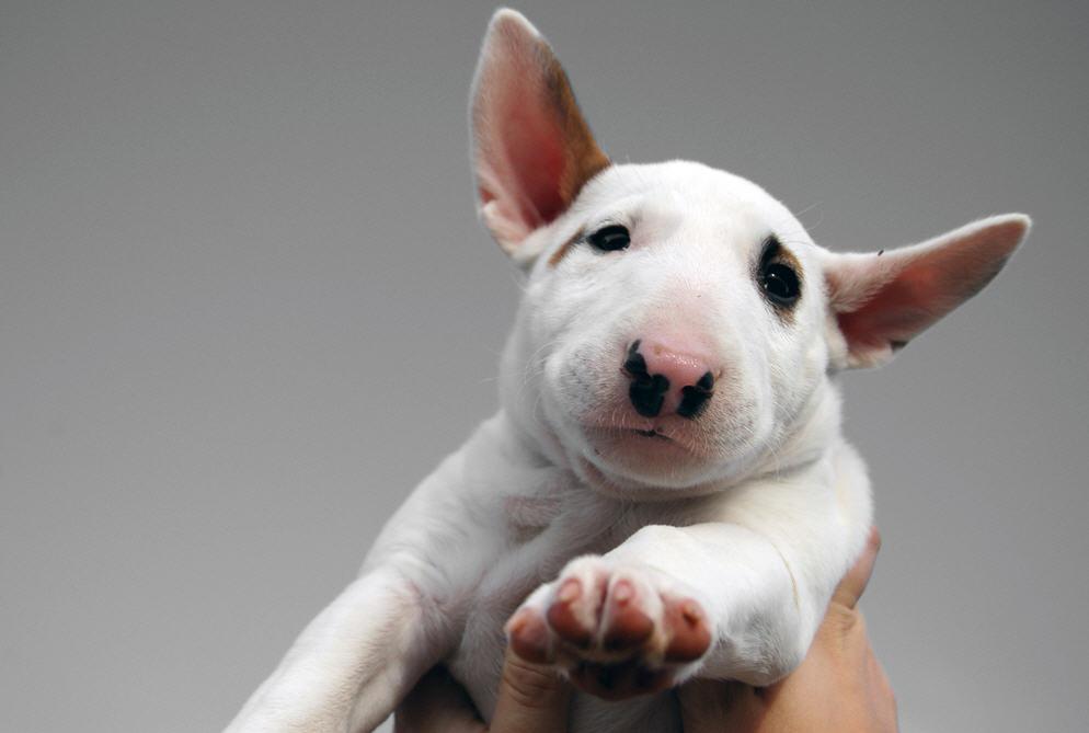 Собака с вытянутой крысиной мордой