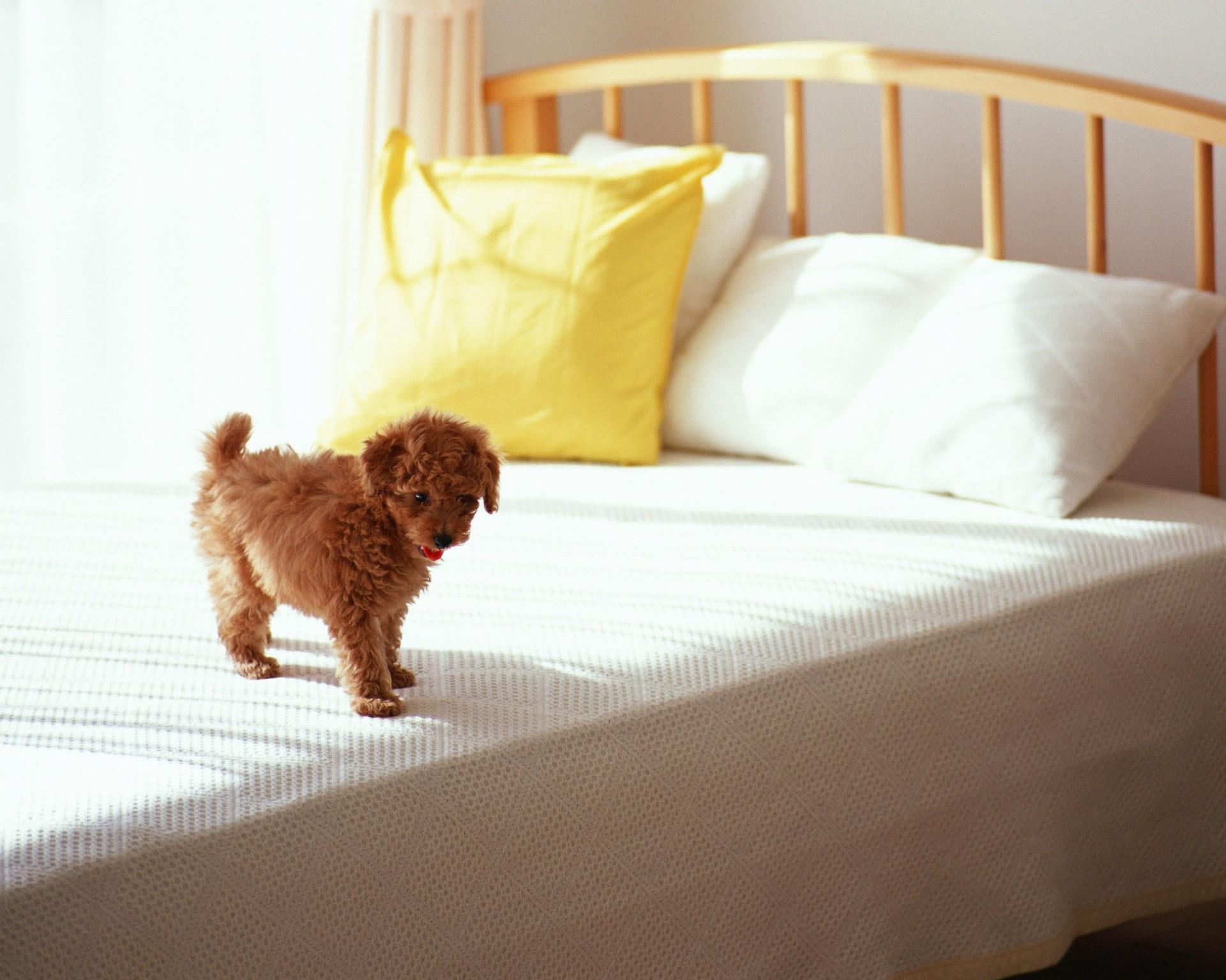Адаптация щенка в новом доме