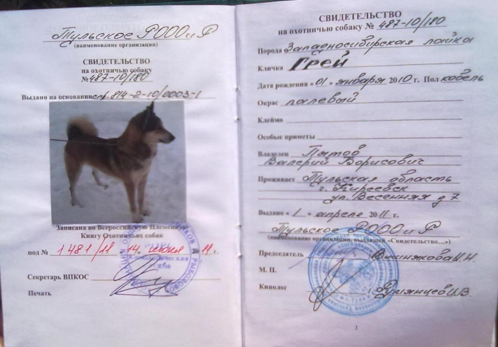 документы на собаку