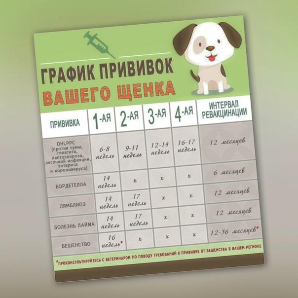 какие прививки делать щенкам
