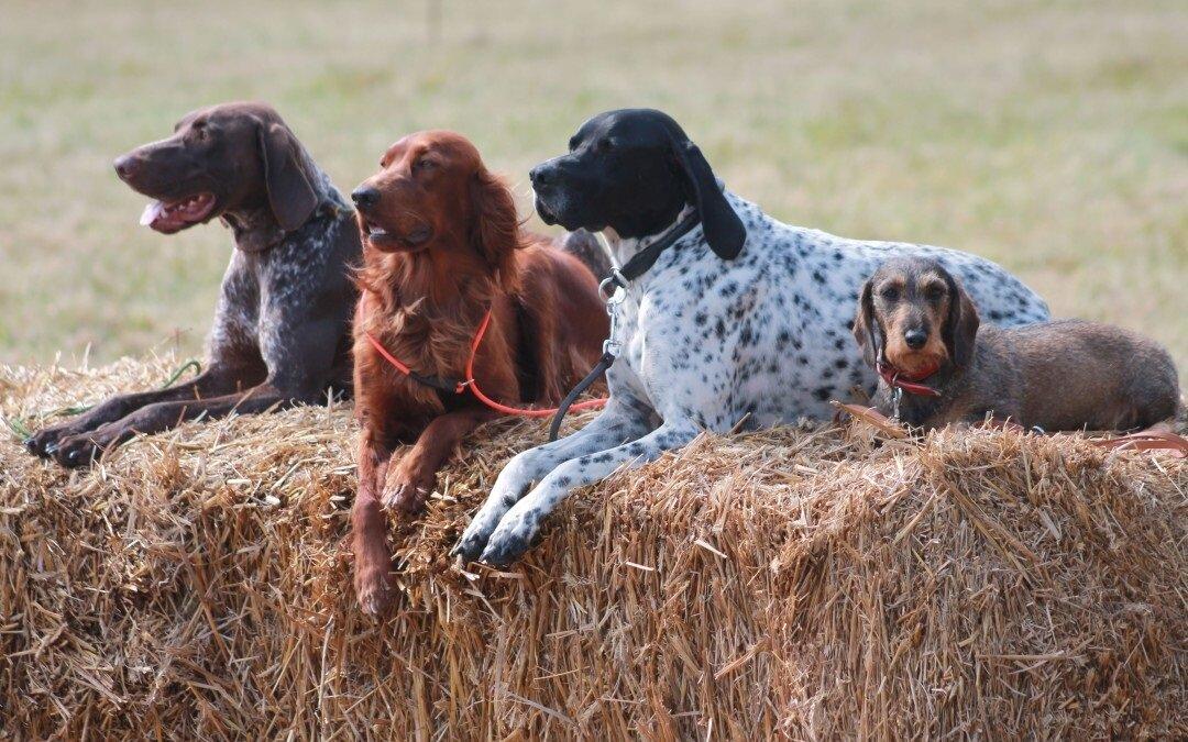 Клички охотничьим породам собак