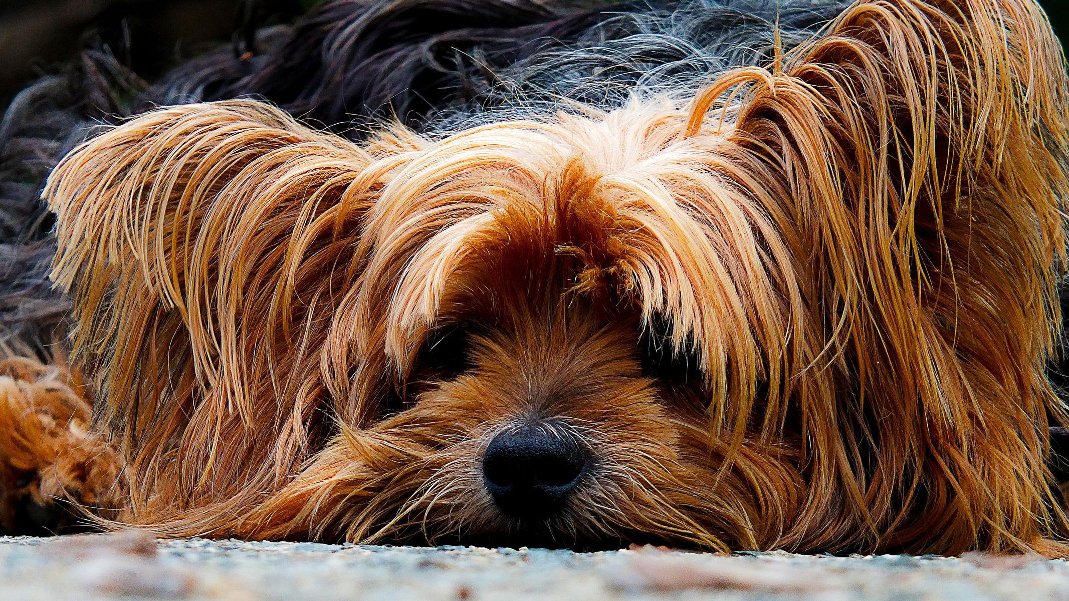 Порода собак у которых отсутствует запах псины