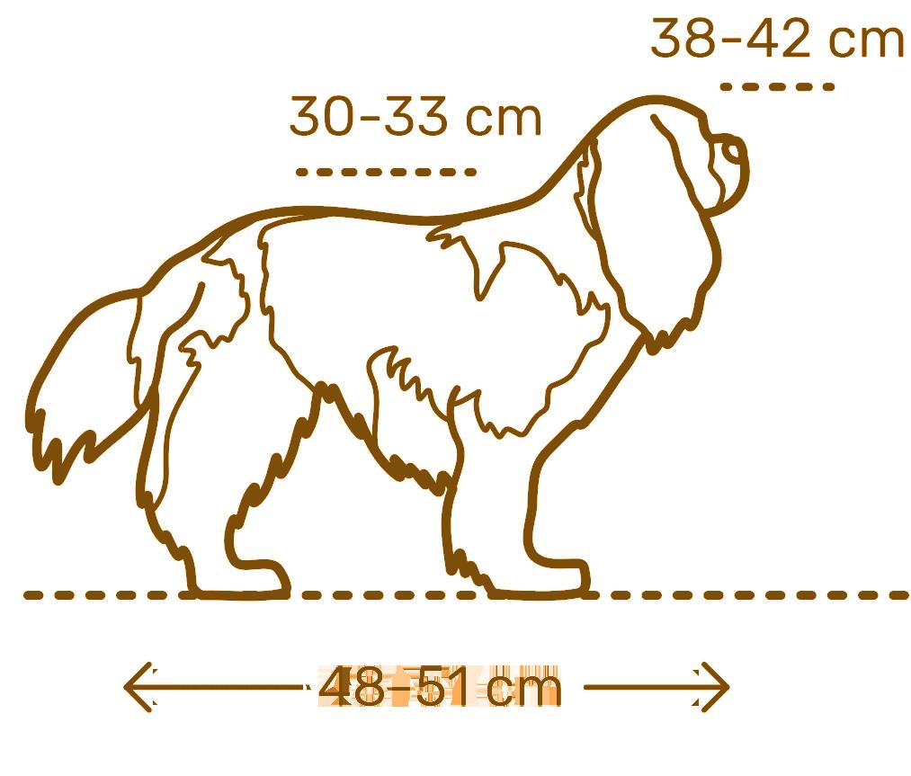 Размеры кокер-спаниеля от щенка до взрослой собаки